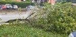 VENARIA-BORGARO-CASELLE-MAPPANO - Maltempo: tetti scoperchiati e alberi abbattuti - immagine 22