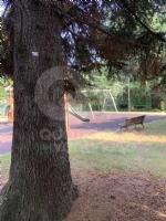 RIVOLI - Nuovo look per le aree verdi comunali: pulizia e taglio dellerba - immagine 12