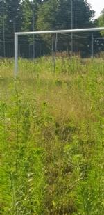 VENARIA - Muri pericolanti ed erba alta: degrado nel campo «naturale» del Don Mosso - immagine 12