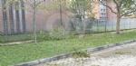 VENARIA-BORGARO-CASELLE-MAPPANO - Maltempo: tetti scoperchiati e alberi abbattuti - immagine 24