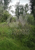 VENARIA - Il degrado di Corona Verde: tra atti vandalici, scarsa manutenzione e costruzioni mai finite - immagine 14
