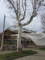 CASELLE - Il forte vento distrugge la tenda della tensostruttura del PratoFiera - immagine 1