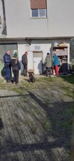 CASELLE - Abbandonati, senza cibo da venti giorni e feriti: salvati due cani - immagine 1