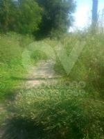 VENARIA - Moderati, Pd e Forza Italia: «Lerba è altissima. La città è una giungla» - immagine 1