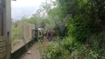 RIVOLI - Maltempo: crolla un albero, sei famiglie restano isolate - immagine 1