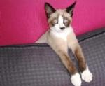 DRUENTO - Smarrito il gattino Ugo: i proprietari lanciano lappello - immagine 1