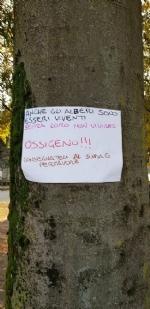 VENARIA - Cartelli e disegni per dire «no» allabbattimento degli alberi in via Amati - immagine 1