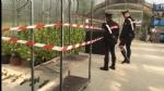 RIVOLI - Carabinieri chiudono il «vivaio della cannabis»: arrestati marito e moglie - FOTO E VIDEO - immagine 1
