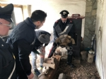 RIVOLI - Traffico illegale di specie animali protette: sequestrate 10 tartarughe ad un 46enne - immagine 1