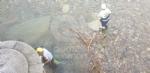 VENARIA - La Protezione Civile pulisce e mette in sicurezza il Ceronda - LE FOTO - immagine 1