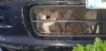 RIVOLI - Incastrato nel radiatore di una macchina: gatto salvato dai vigili del fuoco - immagine 1