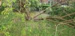 VENARIA-BORGARO-CASELLE-MAPPANO - Maltempo: tetti scoperchiati e alberi abbattuti - immagine 10