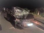 SAN GILLIO - Incidente stradale: auto prende in pieno due cavalli. E li uccide - immagine 1