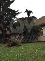 VENARIA - MALTEMPO: Parte la conta dei danni. Sopralluogo del sindaco in tutta la città - immagine 1
