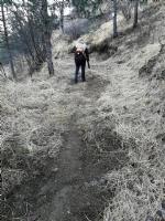 VALLI - Tempesta di Foehn in arrivo: raffiche tra 100 e 180 km/h. Pericolo incendi boschivi - immagine 1