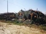 BORGARO - Associazioni e cittadini uniti per ripulire il Chico dopo il maltempo - immagine 1