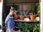 """RIVOLI - In casa una serra per produrre cannabis """"bio"""": tre rivolesi in manette FOTO E VIDEO - immagine 1"""