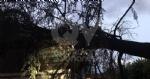 MAPPANO - Il forte vento fa cadere un albero di grosso fusto su una casa in via Meucci - immagine 1