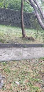 VENARIA-BORGARO-CASELLE-MAPPANO - Maltempo: tetti scoperchiati e alberi abbattuti - immagine 33