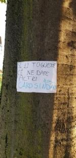 VENARIA - Cartelli e disegni per dire «no» allabbattimento degli alberi in via Amati - immagine 2