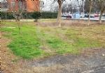 VENARIA - Degrado delle aree private: prime pulizie e nuove lettere dintimazione - FOTO - immagine 2