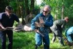 GRUGLIASCO - Liberati quattro giovani caprioli, curati dal Centro Animali Non Convenzionali - immagine 2