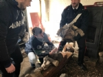 RIVOLI - Traffico illegale di specie animali protette: sequestrate 10 tartarughe ad un 46enne - immagine 2