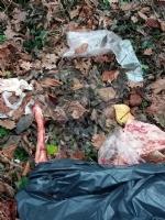 GIVOLETTO - Giallo in strada degli Anterei: animale scuoiato e chiuso in un sacco nero FOTO - immagine 2