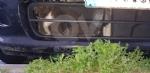 RIVOLI - Incastrato nel radiatore di una macchina: gatto salvato dai vigili del fuoco - immagine 2