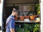 """RIVOLI - In casa una serra per produrre cannabis """"bio"""": tre rivolesi in manette FOTO E VIDEO - immagine 2"""