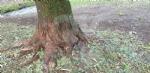 VENARIA-BORGARO-CASELLE-MAPPANO - Maltempo: tetti scoperchiati e alberi abbattuti - immagine 41