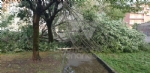 VENARIA-BORGARO-CASELLE-MAPPANO - Maltempo: tetti scoperchiati e alberi abbattuti - immagine 42
