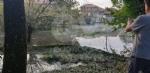 VENARIA-BORGARO-CASELLE-MAPPANO - Maltempo: tetti scoperchiati e alberi abbattuti - immagine 43