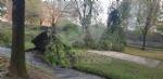 VENARIA-BORGARO-CASELLE-MAPPANO - Maltempo: tetti scoperchiati e alberi abbattuti - immagine 45