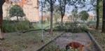 VENARIA-BORGARO-CASELLE-MAPPANO - Maltempo: tetti scoperchiati e alberi abbattuti - immagine 46