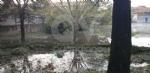 VENARIA-BORGARO-CASELLE-MAPPANO - Maltempo: tetti scoperchiati e alberi abbattuti - immagine 49