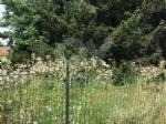 VENARIA - Moderati, Pd e Forza Italia: «Lerba è altissima. La città è una giungla» - immagine 3