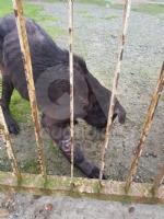 CASELLE - Abbandonati, senza cibo da venti giorni e feriti: salvati due cani - immagine 3