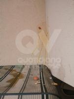 MAPPANO - Idioti nuovamente in azione: lanciate uova contro numerose case - immagine 3