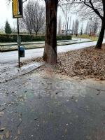 VENARIA - Dopo sei anni, vengono potati gli alberi in via Di Vittorio - immagine 3