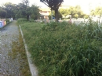 VENARIA - Caldo e temporali: le aiuole diventano piccole giungle... - FOTO - immagine 3