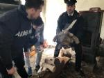 RIVOLI - Traffico illegale di specie animali protette: sequestrate 10 tartarughe ad un 46enne - immagine 3