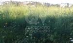 VENARIA - La segnalazione: «Ecco il degrado di Corona Verde» - immagine 3