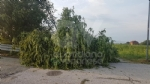 VENARIA-BORGARO-CASELLE-MAPPANO - Maltempo: tetti scoperchiati e alberi abbattuti - immagine 3
