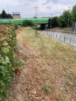 RIVOLI - Nuovo look per le aree verdi comunali: pulizia e taglio dellerba - immagine 3