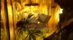"""RIVOLI - In casa una serra per produrre cannabis """"bio"""": tre rivolesi in manette FOTO E VIDEO - immagine 3"""