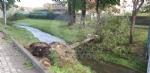 VENARIA-BORGARO-CASELLE-MAPPANO - Maltempo: tetti scoperchiati e alberi abbattuti - immagine 52