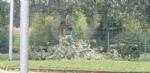 VENARIA-BORGARO-CASELLE-MAPPANO - Maltempo: tetti scoperchiati e alberi abbattuti - immagine 54