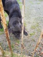 CASELLE - Abbandonati, senza cibo da venti giorni e feriti: salvati due cani - immagine 4