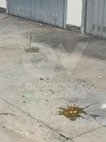 MAPPANO - Idioti nuovamente in azione: lanciate uova contro numerose case - immagine 4